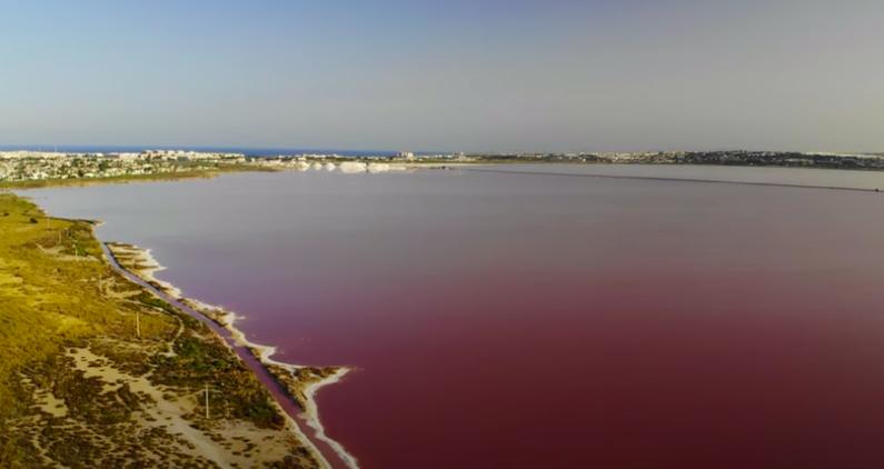 El Síndic insta al Ayuntamiento de Torrevieja a limpiar y señalizar el perímetro de la Laguna Rosa